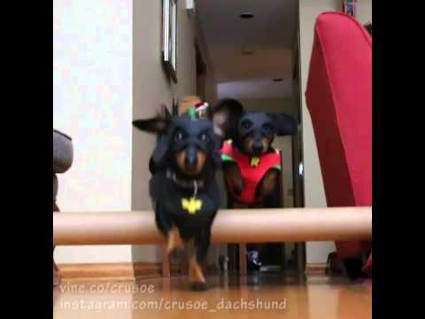 BATDOG & Robin Defeat the Burglar!