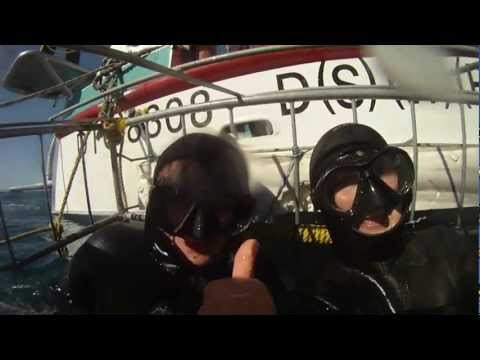 Shark Cage Diving Gansbaai, South Africa