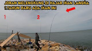 Mancing di pulau dapat ikan langka 1tahun ikan ini baru ada