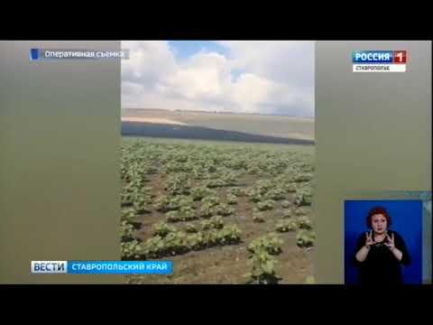 На Ставрополье горят поля