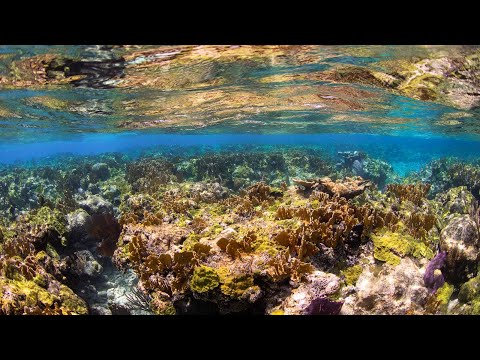 Bahamas Below - Underwater 4K
