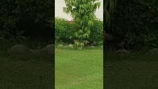 Green IHM Ahmedabad Campus