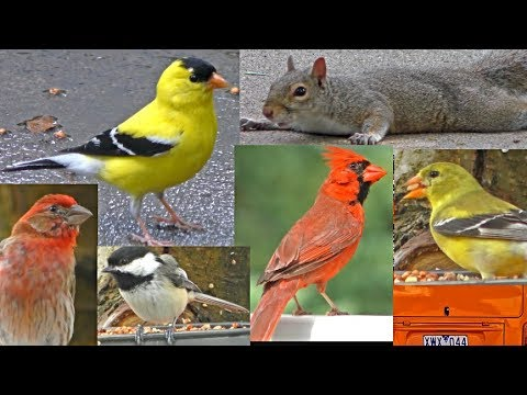 Nature & Bird Video for Cats and Dogs to Watch ( You Pet Loves Bird Singing )