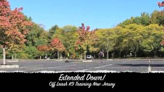 Fear Aggressive Resuce Boarder Collie Off Leash K9 Training New Jersey