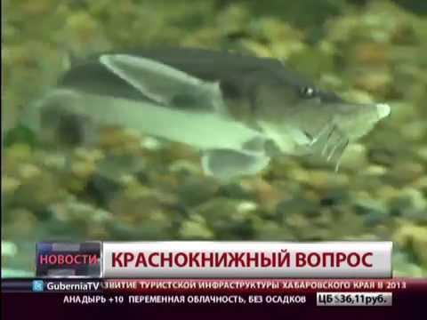 Краснокнижный вопрос. Новости. GuberniaTV