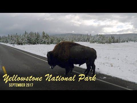 Yellowstone National Park and Bear World 2017