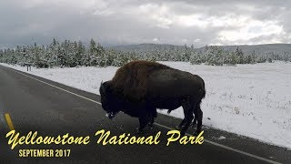 Yellowstone National Park and Bear World 2017