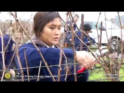 2016 California FFA Pruning Contest in Napa County