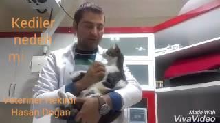 Kedi neden mırlar,Kedi neden hırlar ,Kedi Mırlaması,Kedi Mırıldaması,Kedi mırıltısı,mirmir faydalari