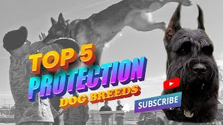 Top 5 Protection Dog Breeds
