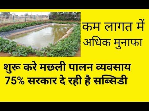 मछली पालन कैसे करे || fish farming business plan Hindi