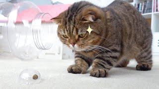 간식 때문에 심술난 고양이가 너무 귀여워요!