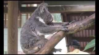 Австралия Флора и фауна.(, 2013-04-30T14:31:41.000Z)