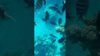 Риф отеля 2 JOLIE VILLE GOLF RESORT 5 Шаркс Бей Шарм Эль Шейх Южный Синай Египет