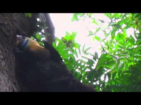 north sulawesi tangkoko naturereserve