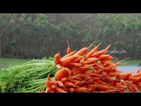 munnar the most beautiful place in india   Mattupetty kerala tourism | Kerala tourism