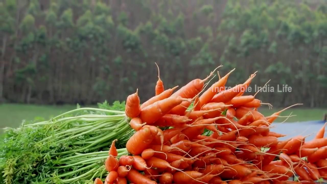 Munnar The Most Beautiful Place In India Mattupetty Kerala Tourism Kerala Tourism Youtube