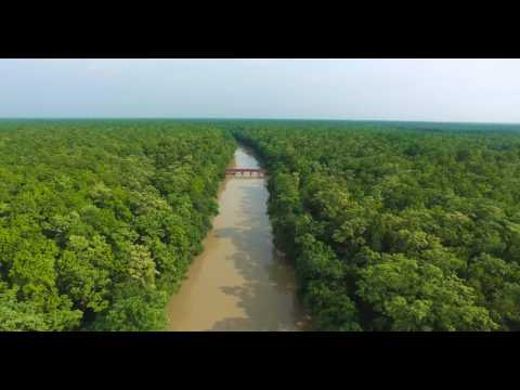 Pilibhit Drone Video (Forest aerial drone video footage)