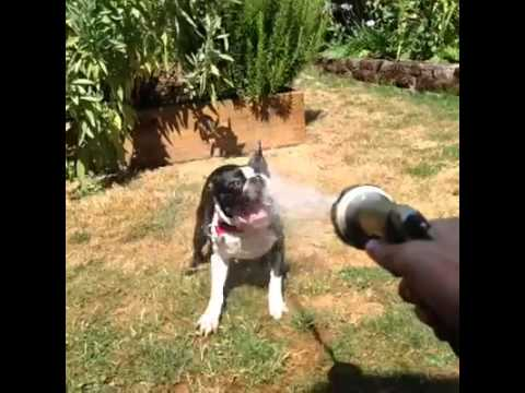 Dog Drinks Water - Vine - YouTube