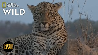 Safari Live - Day 355 Nat Geo Wild