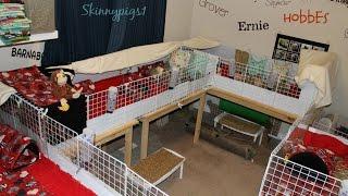 Pet Room: 3 C&C Guinea Pig Cages & Free Range Bunny