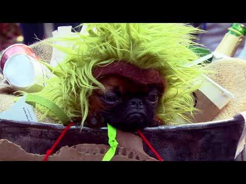 The Annual Tompkins Square Park Halloween Dog Parade