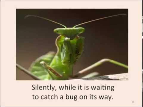Come With Me Science Insects: Praying Mantis Song