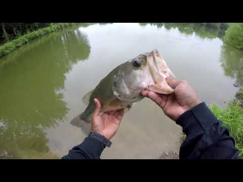 Amazing Pond Fishing (Part 1) | Happy Father's Day