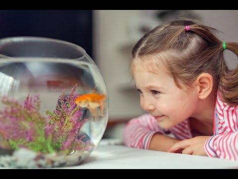 Los 8 mejores peces para niños