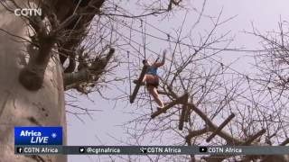Accrobaobab adventure park gaining popularity in Senegal