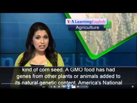 [ANH VĂN] #2. China Refuses Tons of Genetically Changed Corn