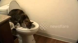 cat pees in toilet but wont poop