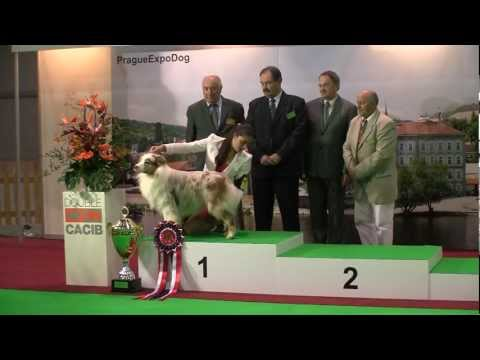 Prague Expo Dog - Double CACIB 11/2012