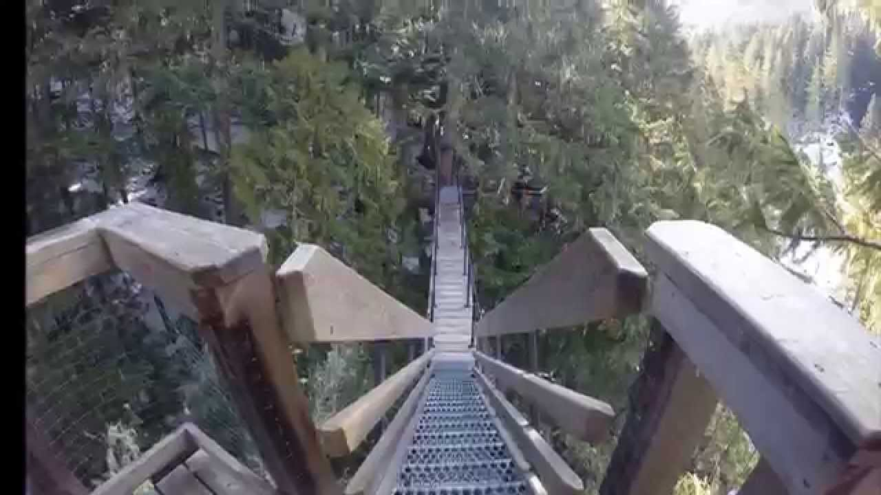Treetrekking in Whistler BC : tree trek canopy walk - memphite.com