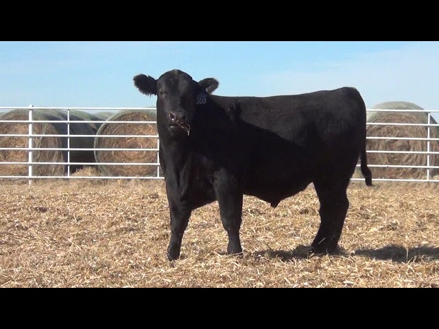 Express Ranches Lot 355