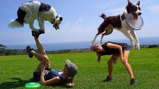 Amazing Trick Dogs THE SUPER COLLIES! *World Record*