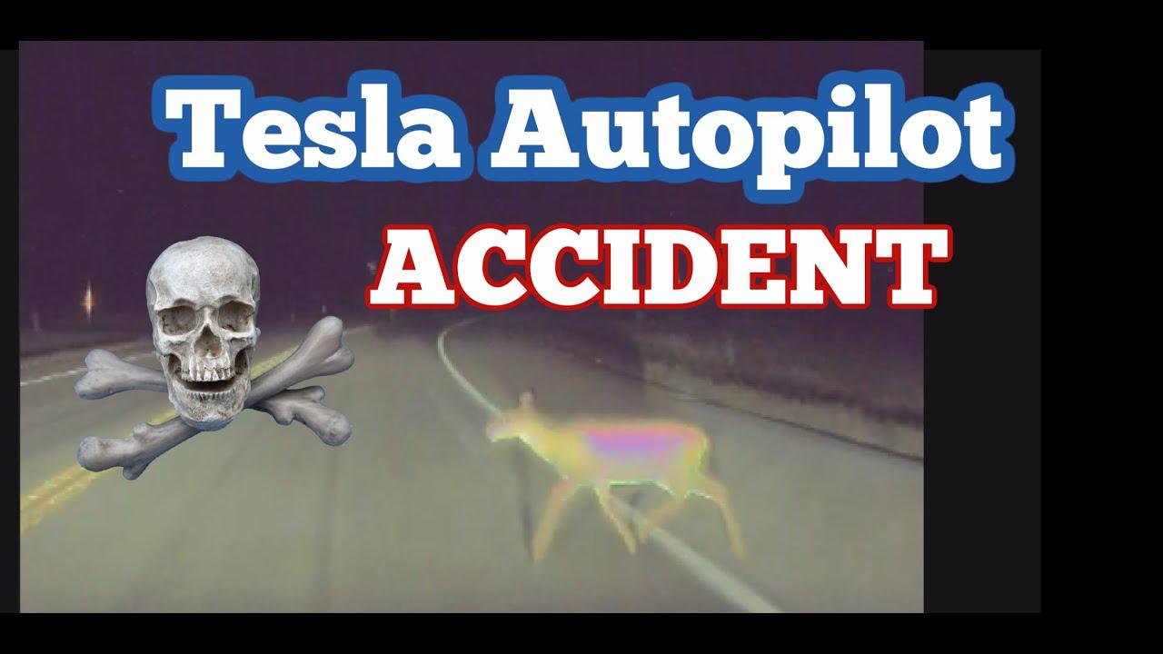 Tesla Autopilot Hits a Deer (and I think it will happen again.)