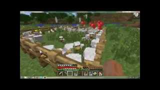Minecraft - Feeding the Chickens