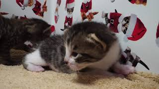 Kitten Close Up 2018-02-20 4K! thumbnail