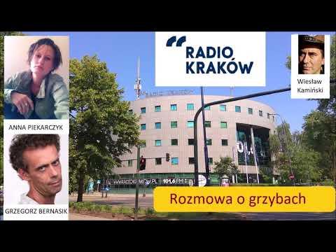 Nagranie z rozmowy o grzybach w Radio Kraków