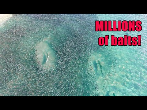 Florida MULLET RUN Migration Fishing! Baitfish EVERYWHERE!! (Stuart Florida Fishing)