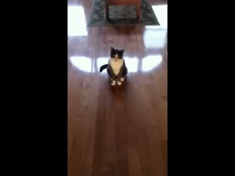 Sky does an awesome cat trick!