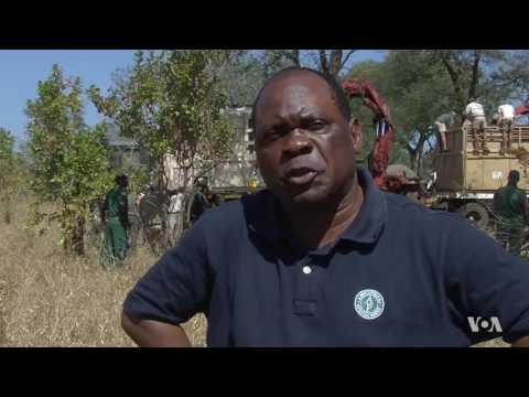 Malawi Relocating 500 Elephants