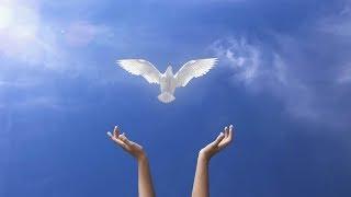 Chúng con được no say Thần Khí Chúa - Ngài trải rộng trên khắp thế giới - Ảnh Phép Lạ Chúa Giêsu