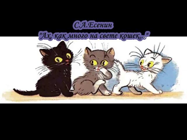 Изображение предпросмотра прочтения – НиколайРадионов читает произведение «Ах, как много на свете кошек...» С.А.Есенина