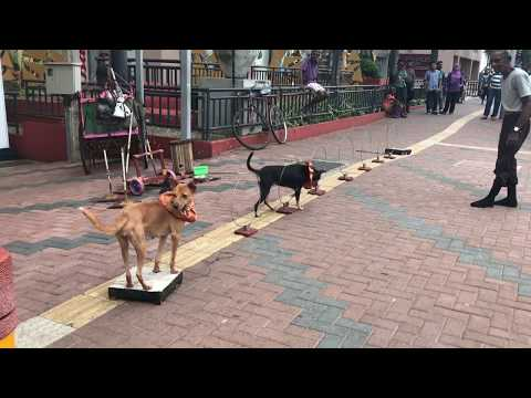 The Most Amazing Street Performance (Street dog show )