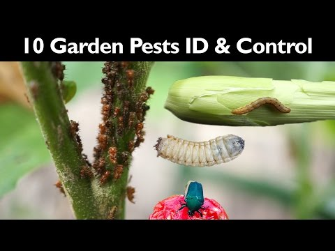 10 Garden Pests & How To Organically Control Them