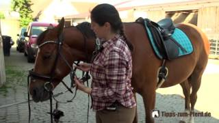 Pferd auftrensen - Trense richtig aufzäumen