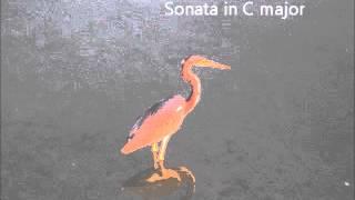 Domenico Scarlatti: Sonata in C Major, Longo 104