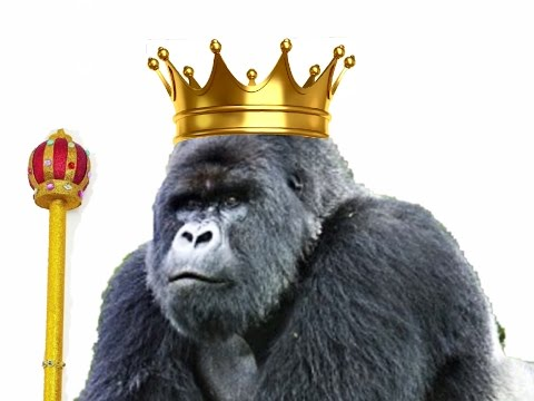 A Gorilla King, the True Story of Titus the King of Gorillas